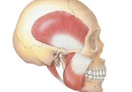 CORSO: L'esclusiva importanza dell'esame muscolare e articolare nella corretta valutazione e nell'impostazione della terapia rieducativa del distretto cranio cervico mandibolare